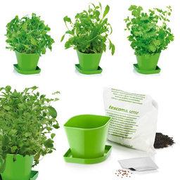 Výhodný balíček: Pěstování bylinek exotika SENSE, 3 druhy