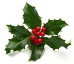 Vánoční cesmína
